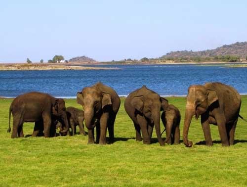 National Parks in Sri Lanka