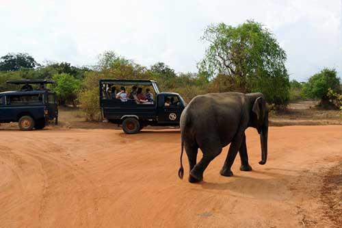 Treasures of Sri Lanka - Day 9 - Yala National Park